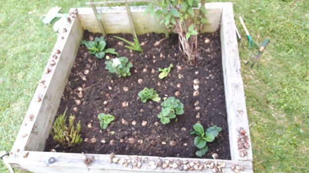 Bulbes et plantes