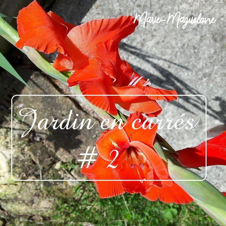 Jardin en carrés # 2
