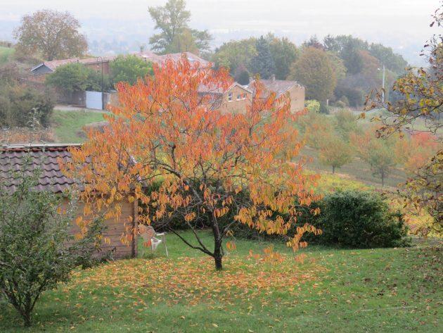 Mon jardin en automne Marie-Maguelone