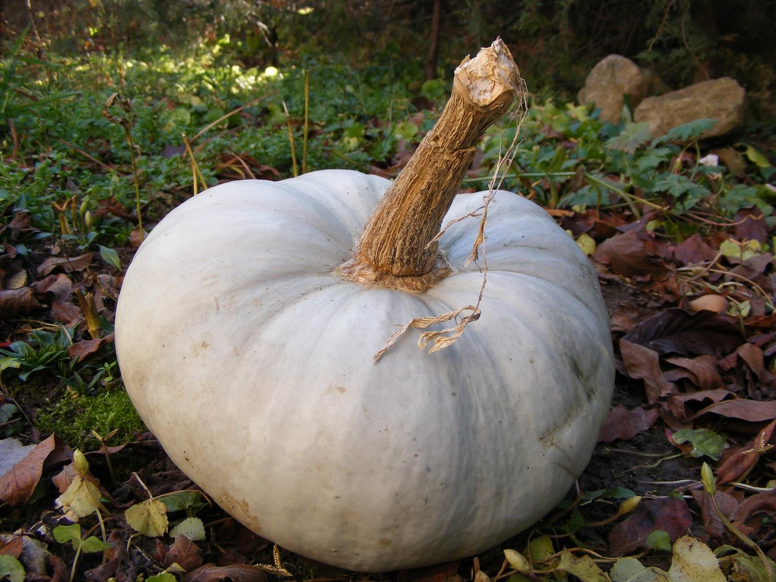 Créations citrouille! Pumpkins create! N°1…