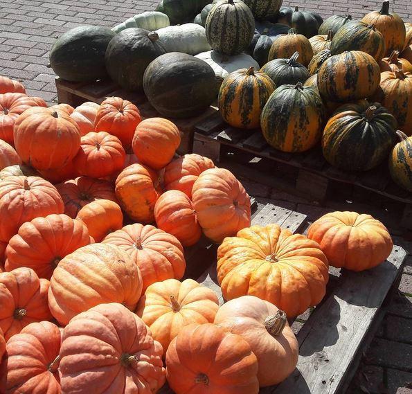 Création citrouille… pumpkins create N°3