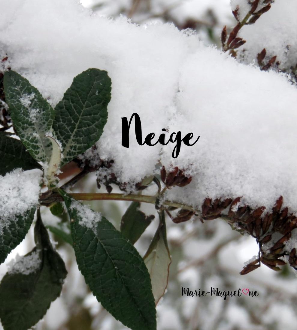 Paysages d'hiver enneigés