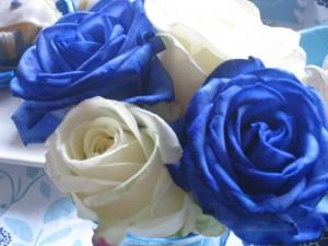 Rose bleues et blanches