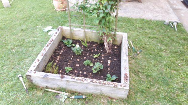 Plantations : jardin en carré