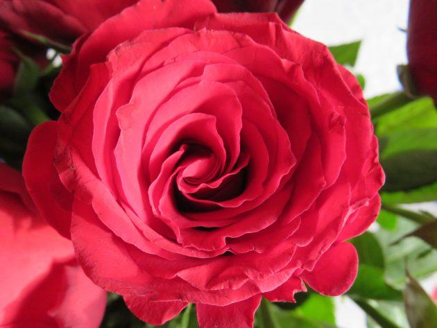 Rose rouge pour le Happy Mail thème fleurs